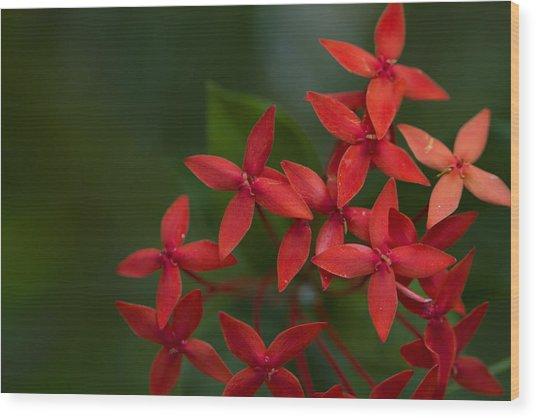 Jungle Geranium Wood Print