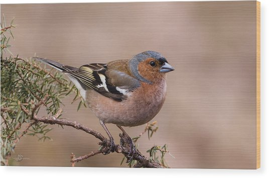 Juniper Bird Wood Print