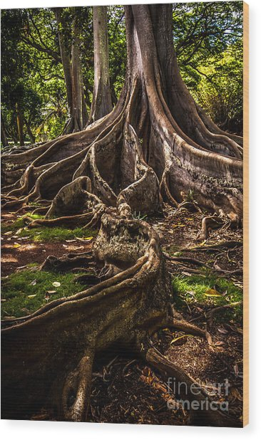 Jurassic Park Tree Trailing Root Wood Print
