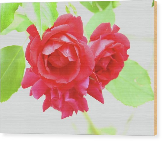 Just A Rose Wood Print