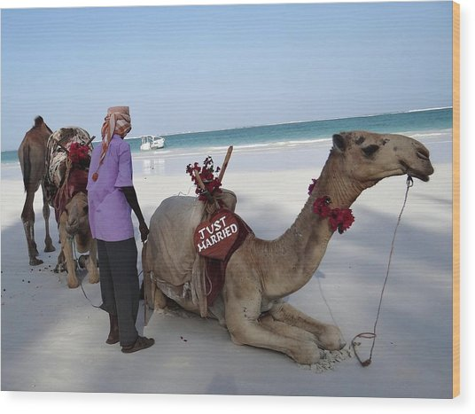 Just Married Camels Kenya Beach Wood Print