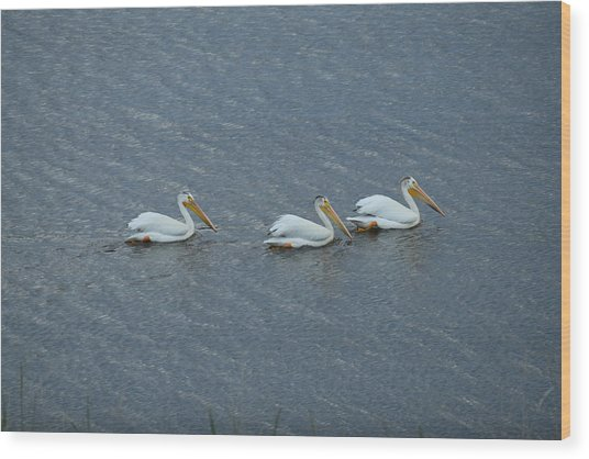 Triple Pelicans Lake John Swa Co Wood Print