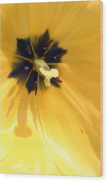Just Tulip Wood Print