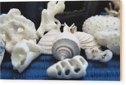 Just White Seashell 1 Wood Print