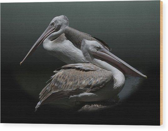 Juxtaposition - Pelicans Wood Print