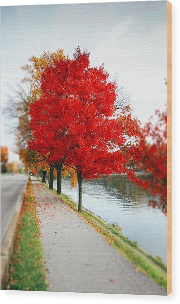 Kanawha Boulevard In Autumn Wood Print