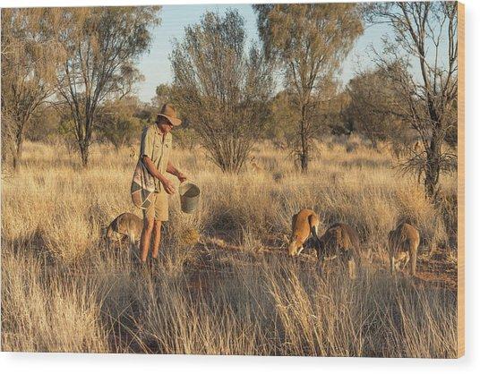 Kangaroo Sanctuary Wood Print