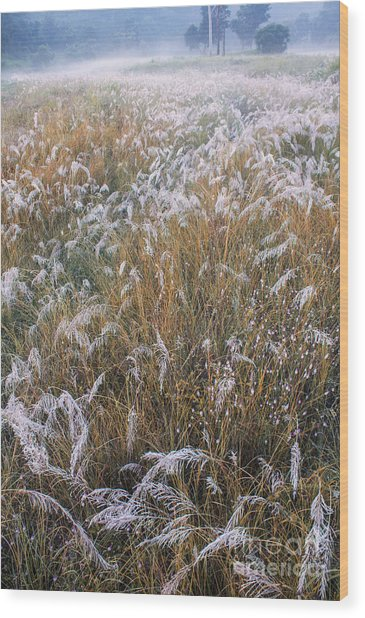 Kans Grass In Mist Wood Print