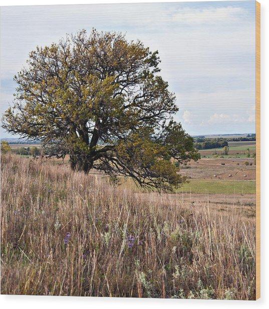 Kansas One Tree Hill Square Wood Print