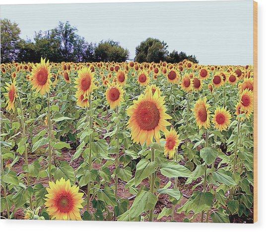 Kansas Sunflower Field Wood Print