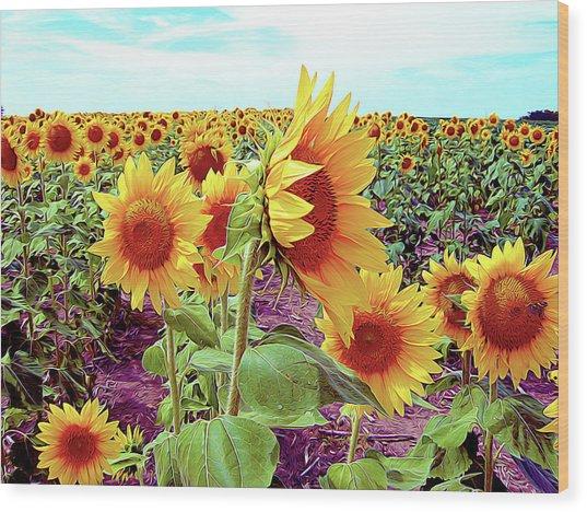 Kansas Sunflowers Wood Print
