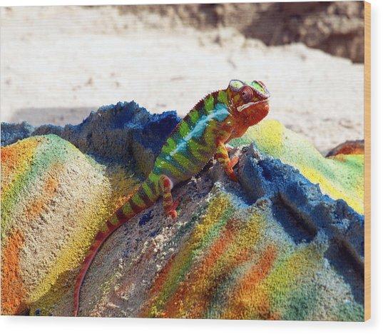 Karma Kameleon  Wood Print