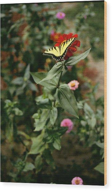 Kathy's Butterfly Wood Print by Lynard Stroud