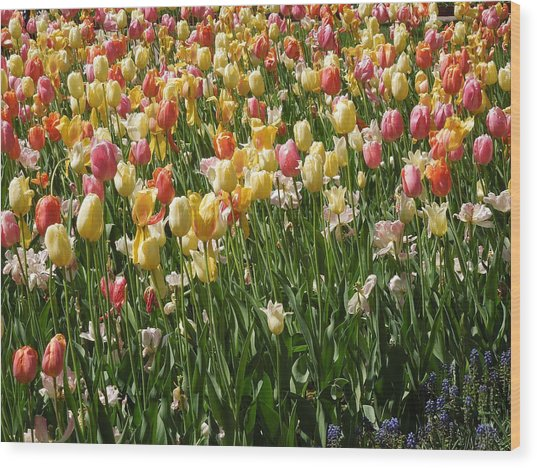 Kathy's Tulips Wood Print