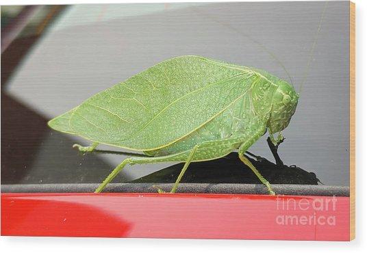 Katydids- Bush Crickets Wood Print