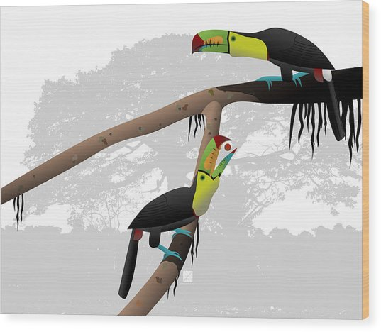 Keel-billed Toucans Wood Print
