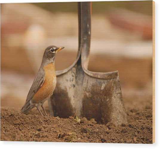 Keep Digging Wood Print by Don Wolf