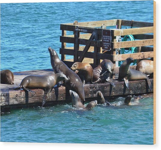 Keep Off The Dock - Sea Lions Can't Read Wood Print