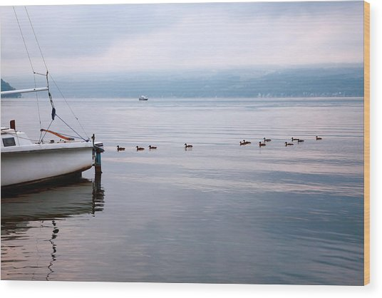 Keep Your Ducks In A Row Wood Print by Steven Ainsworth