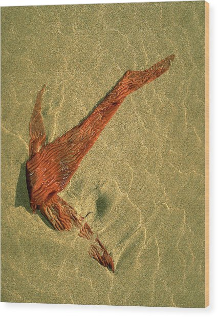 Kelp 2 Wood Print