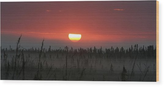 Kenai Peninsula Early Sunrise Wood Print by Mary Gaines