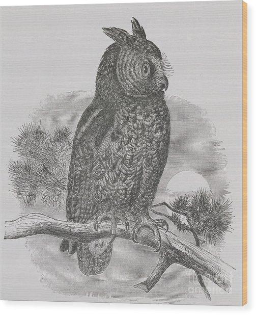 Kennicott's Owl Wood Print