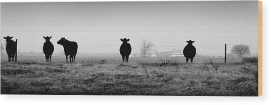 Kentucky Cows Wood Print by Todd Fox