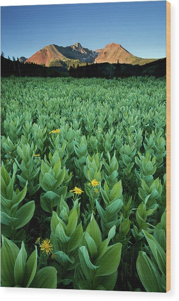 Kilpacker Basin Wood Print