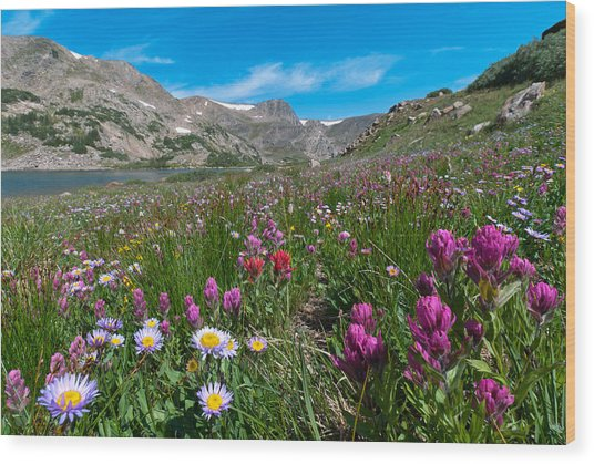 King Lake Summer Landscape Wood Print