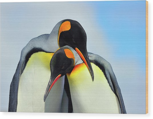 King Penguin Wood Print