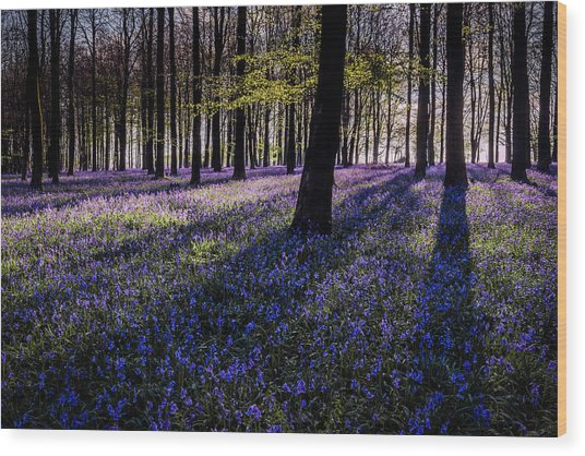 Kings Wood Bluebells Wood Print