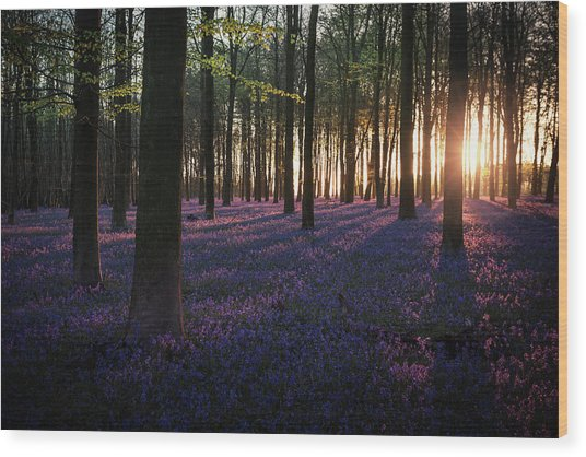 Kingswood Bluebells Sunrise Wood Print
