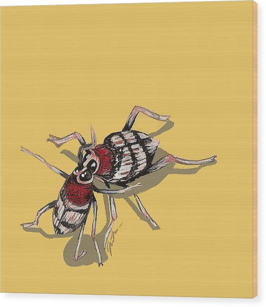 Kissing Weevils Wood Print