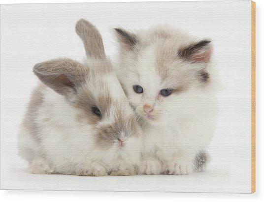 Kitten Cute Wood Print