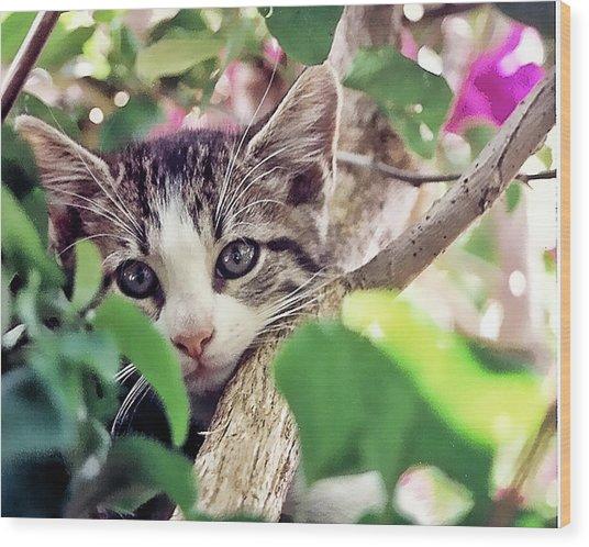 Kitten Hiding Out Wood Print by Francesco Roncone