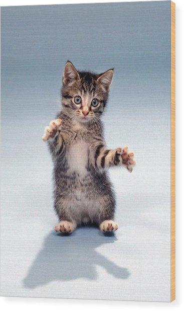 Kitten Hug Wood Print