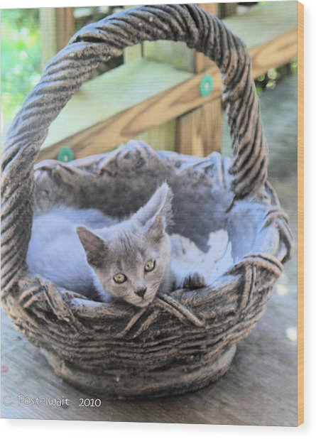 Kitten In A Basket Wood Print