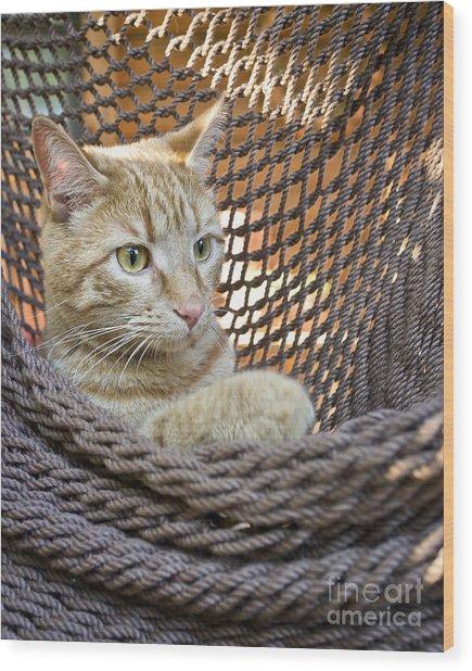 Kitten In A  Hammock Wood Print