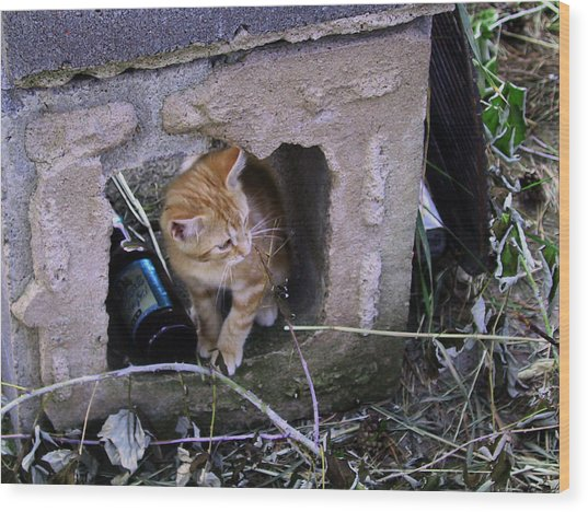 Kitten In The Junk Yard Wood Print