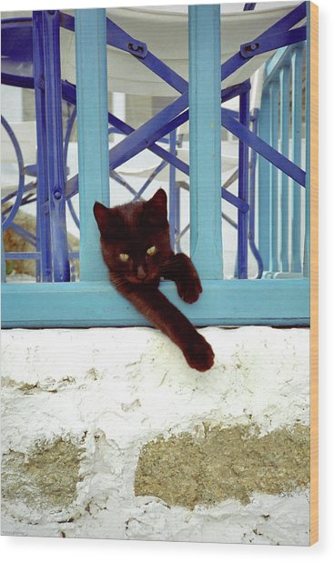 Kitten With Blue Rail Wood Print