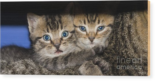 Kittens In The Shadow Wood Print