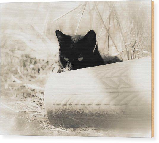 Kitty Stalks In Sepia Wood Print