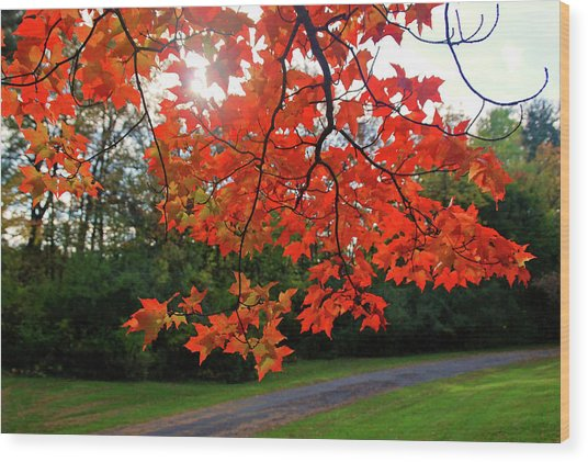 Knox Park 8444 Wood Print