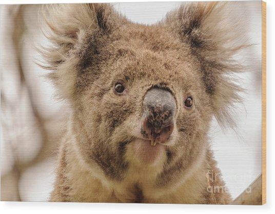 Koala 4 Wood Print