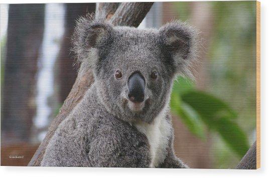 Koala Bear 7 Wood Print