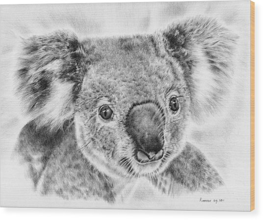 Koala Newport Bridge Gloria Wood Print