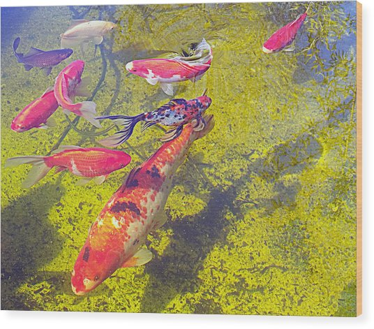 Koi And Friends Wood Print