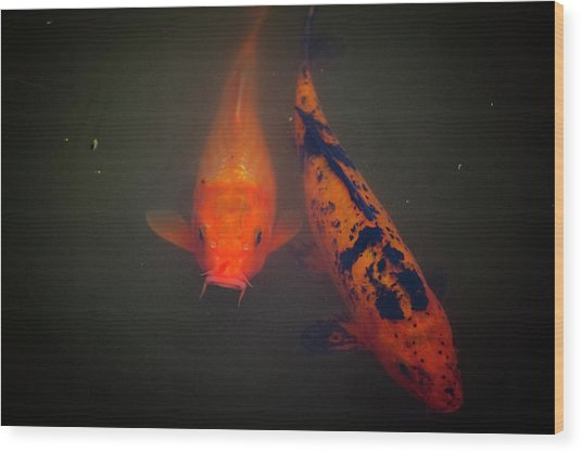 Koi Wood Print by Christina Durity