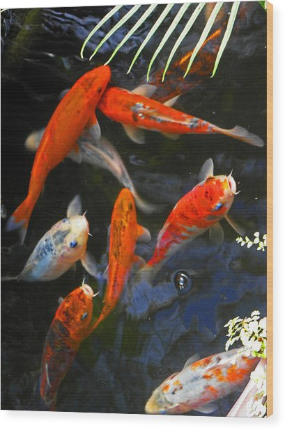 Koi Fish II Wood Print by Elizabeth Hoskinson