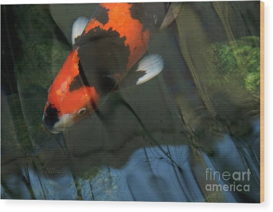 Koi Reflection Wood Print